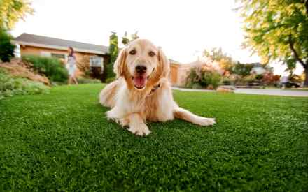 How To Keep Dogs Off Lawn Domestic Beast