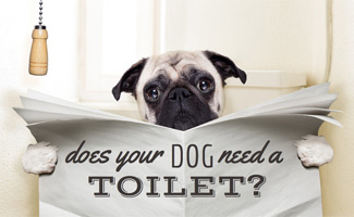 why do dogs drink out of the flushing toilets